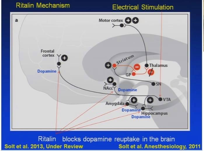"""Conferencia del Dr. Emery Brown """"Impacto de la Anestesia y Sedación en el cerebro"""
